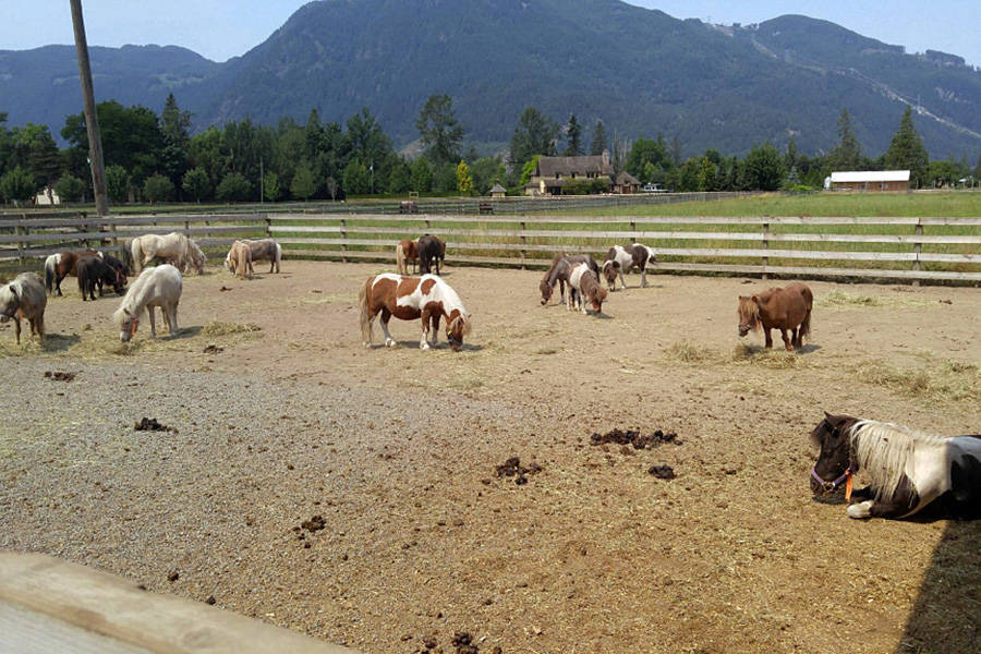 Wildfires could cost B.C. ranchers hundreds of millions ...
