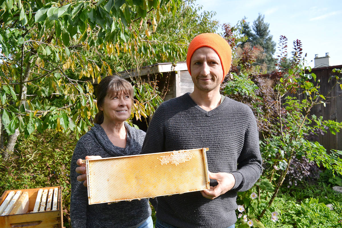 White Rock honeybee deaths prompt inspection by KPU prof